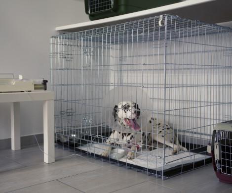 veterinarna ambulancia zalesie reklama